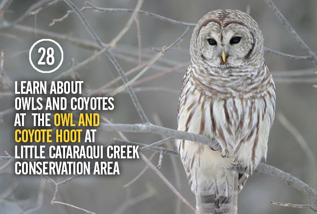 28_owls