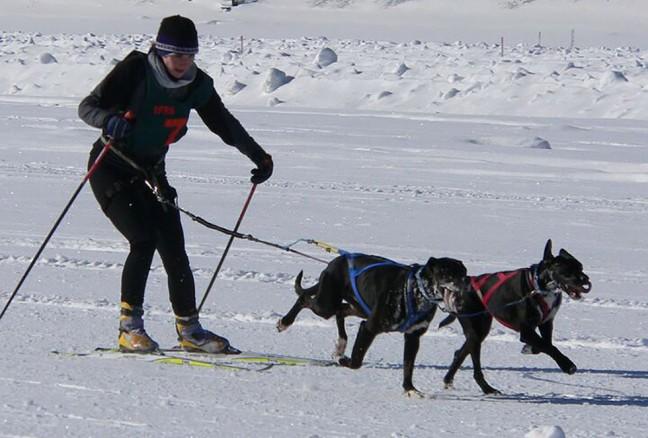 Skijoring. Photo from Wikipedia